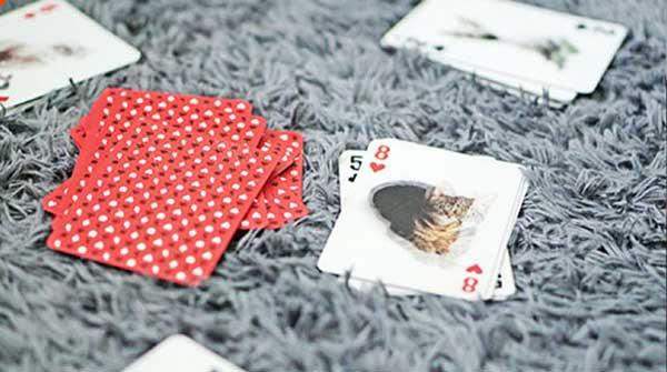 contoh kartu capsa banting